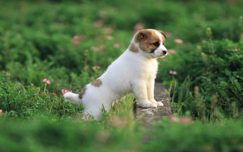Bài văn tả con chó số 4