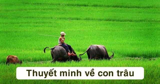 Bài văn thuyết minh về con trâu ở làng quê Việt Nam số 11
