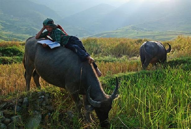 Bài văn thuyết minh về con trâu ở làng quê Việt Nam số 12
